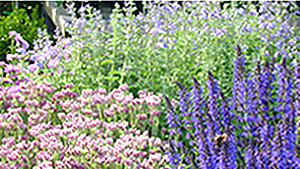 Lakewood-Garden-Center-Flowers2